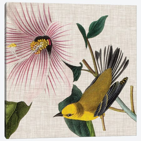 Avian Crop V Canvas Print #WAG142} by John James Audubon Canvas Wall Art