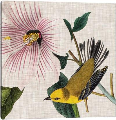 Avian Crop V Canvas Art Print