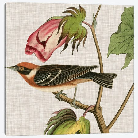 Avian Crop VI Canvas Print #WAG143} by John James Audubon Canvas Artwork