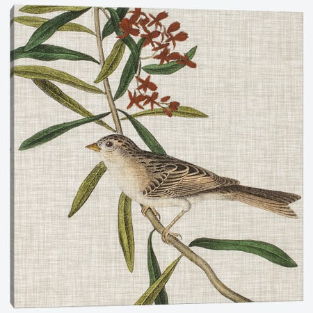 Avian Crop VII Canvas Print #WAG144} by John James Audubon Art Print