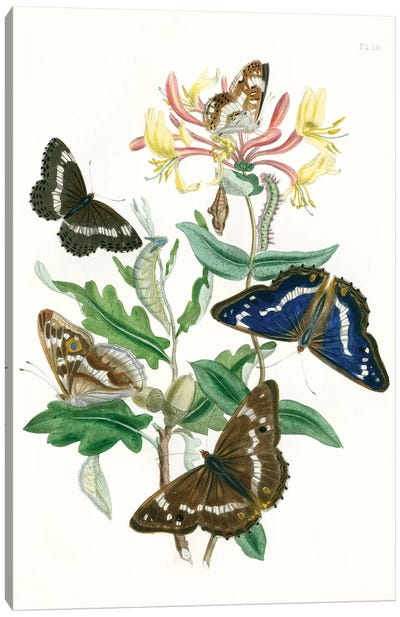 British Butterflies I Canvas Art Print