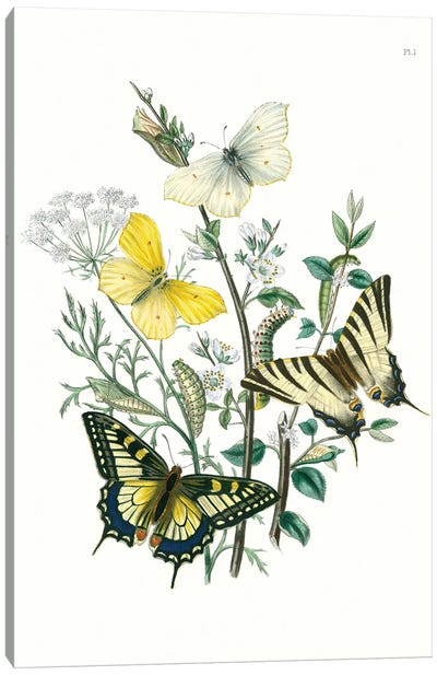 British Butterflies II Canvas Art Print
