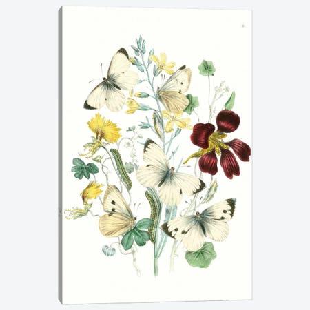 British Butterflies IV Canvas Print #WAG150} by Unknown Artist Art Print