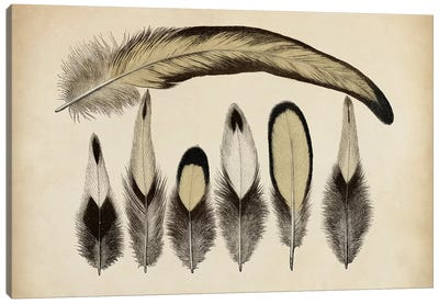 Vintage Feathers VII Canvas Print #WAG15