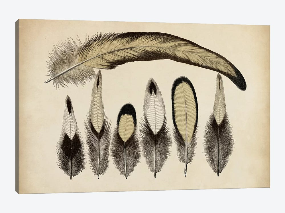 Vintage Feathers VII by World Art Group Portfolio 1-piece Art Print