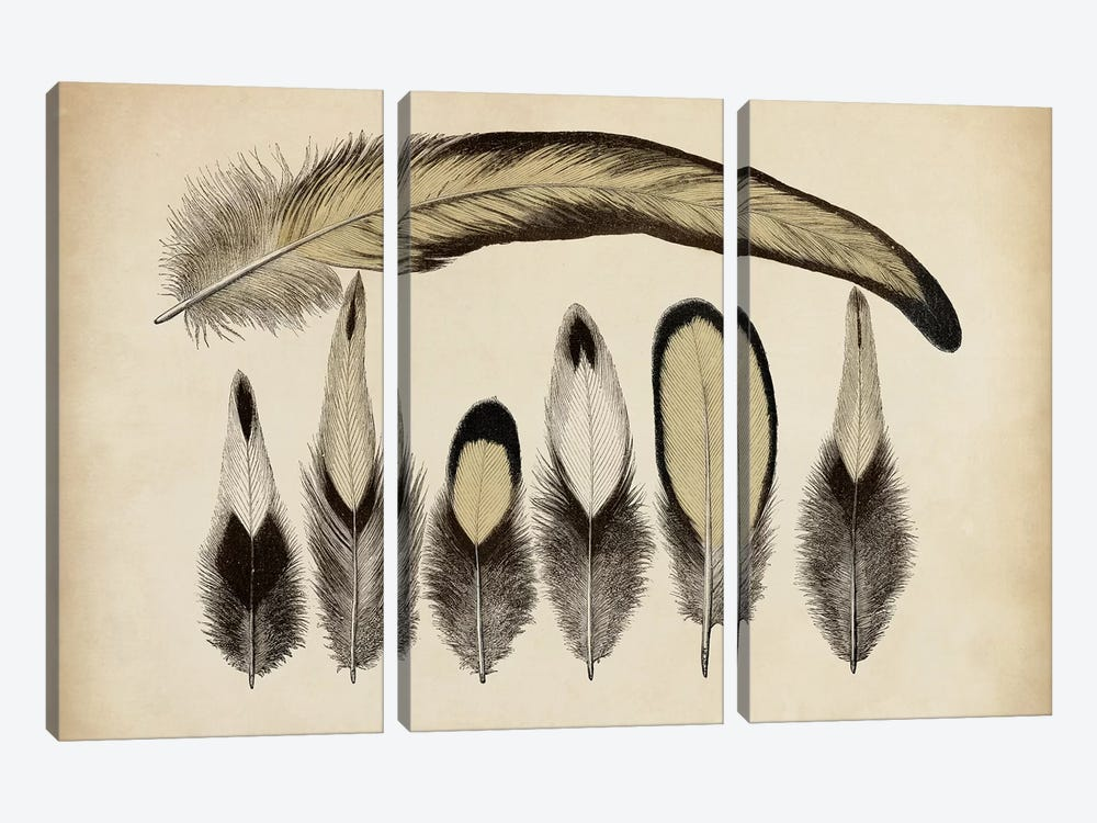 Vintage Feathers VII 3-piece Art Print