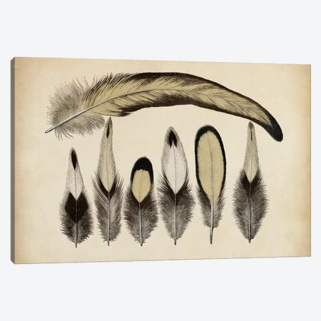 Vintage Feathers VII Canvas Print #WAG15} by World Art Group Portfolio Canvas Art Print