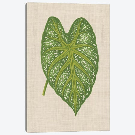 Leaves On Linen I Canvas Print #WAG165} by Unknown Artist Canvas Art Print