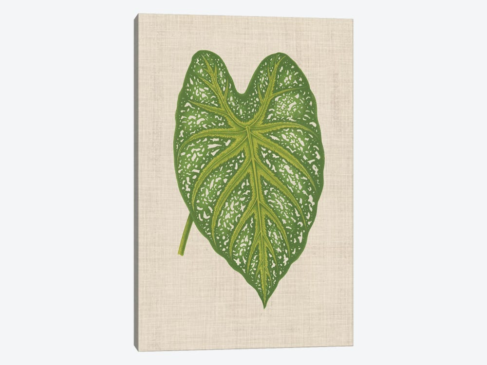 Leaves On Linen I by Unknown Artist 1-piece Canvas Wall Art
