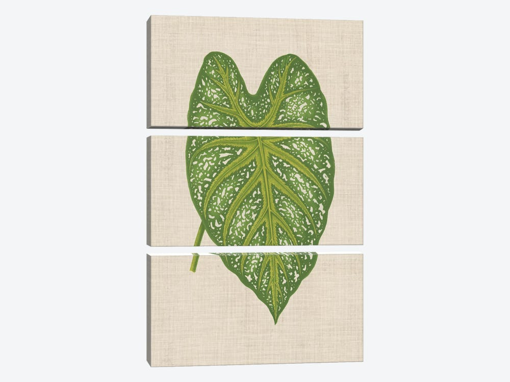 Leaves On Linen I by Unknown Artist 3-piece Canvas Art