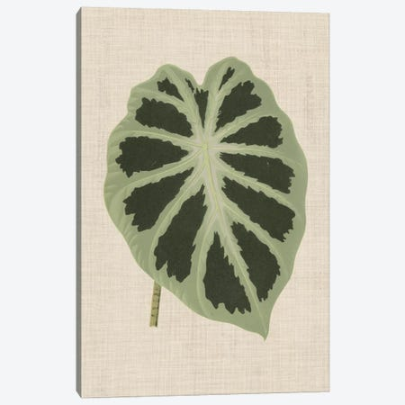 Leaves On Linen II 3-Piece Canvas #WAG166} by Unknown Artist Art Print