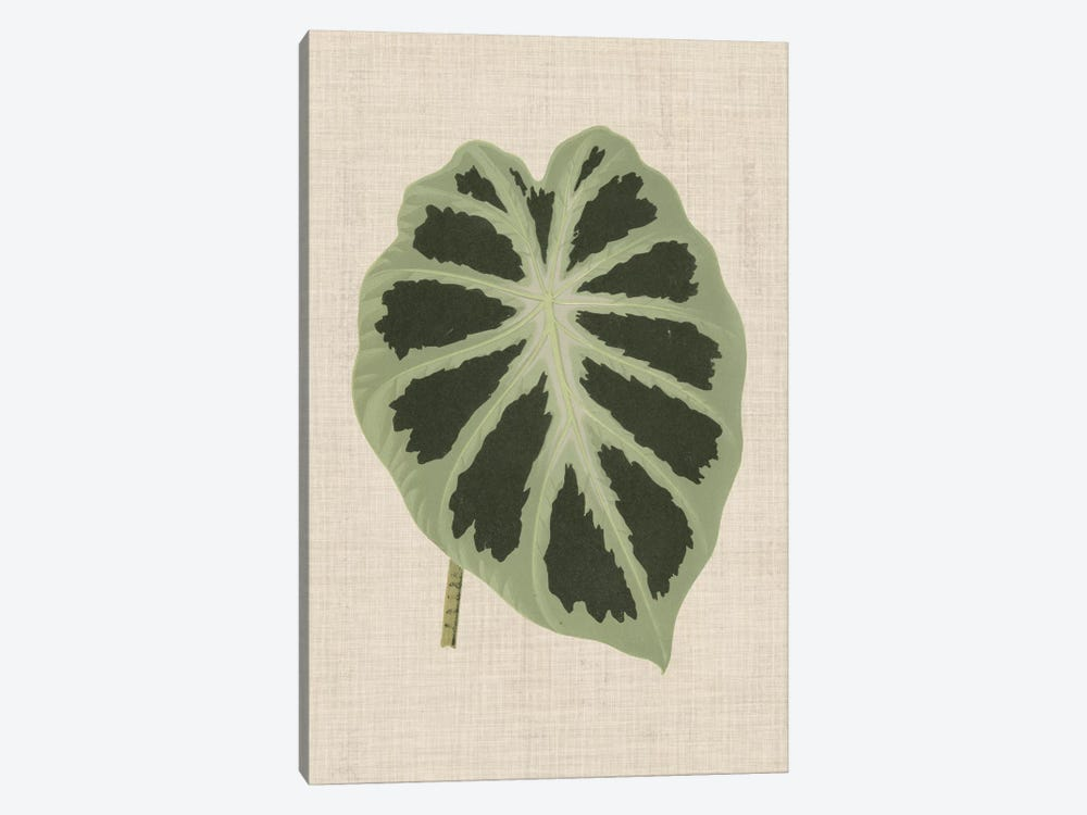 Leaves On Linen II by Unknown Artist 1-piece Canvas Art Print