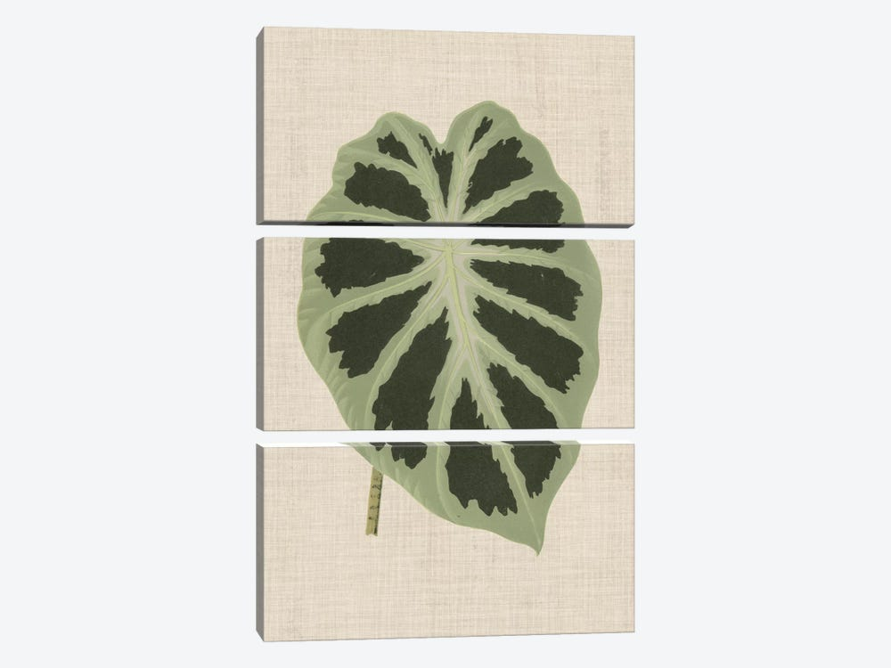 Leaves On Linen II by Unknown Artist 3-piece Canvas Print