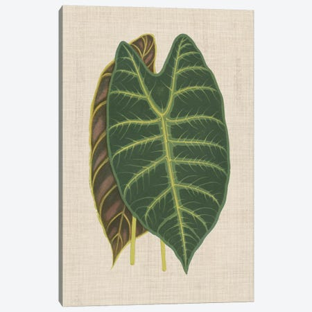Leaves On Linen III Canvas Print #WAG167} by Unknown Artist Canvas Art Print