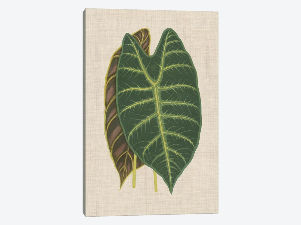 Leaves On Linen III by Unknown Artist 1-piece Canvas Artwork