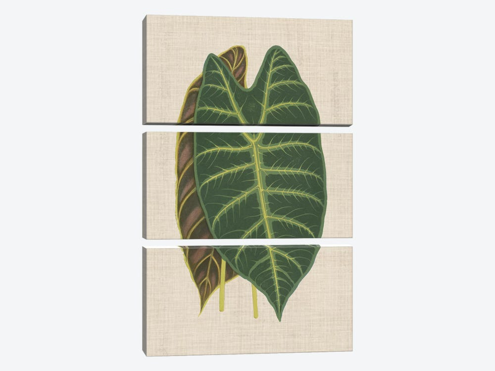 Leaves On Linen III by Unknown Artist 3-piece Canvas Wall Art