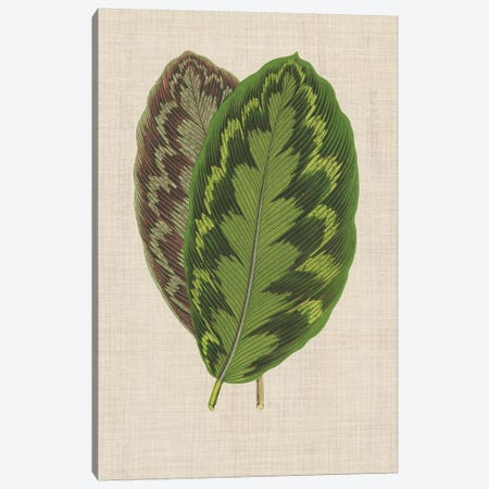 Leaves On Linen IV Canvas Print #WAG168} by Unknown Artist Canvas Art