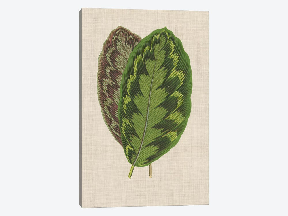 Leaves On Linen IV by Unknown Artist 1-piece Canvas Art Print