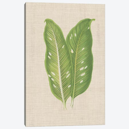 Leaves On Linen V 3-Piece Canvas #WAG169} by Unknown Artist Canvas Artwork