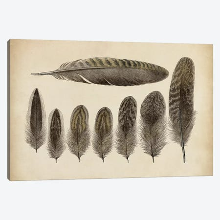 Vintage Feathers VIII Canvas Print #WAG16} by World Art Group Portfolio Canvas Art Print