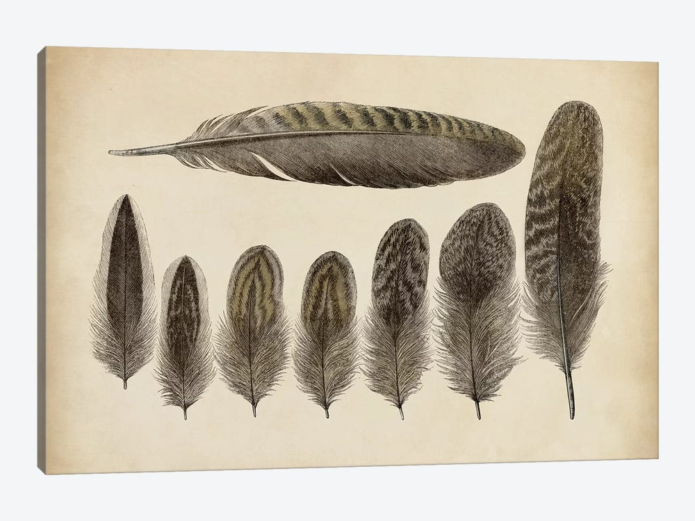 Vintage Feathers VIII by World Art Group Portfolio 1-piece Canvas Wall Art