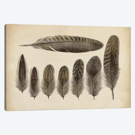 Vintage Feathers VIII Canvas Print #WAG16} by World Art Group Portfolio Canvas Art Print