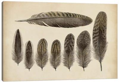 Vintage Feathers VIII Canvas Art Print