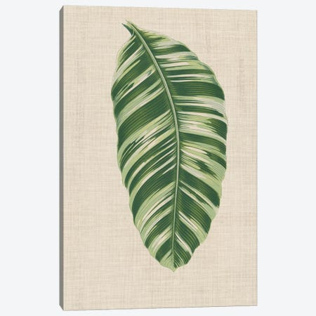 Leaves On Linen VI Canvas Print #WAG170} by Unknown Artist Canvas Art Print