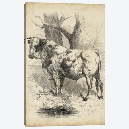 Pastoral Sketch II Canvas Print #WAG181} by Unknown Artist Canvas Artwork