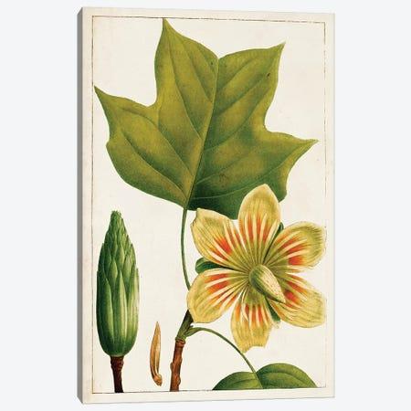 Antique Flowering Trees IV Canvas Print #WAG200} by World Art Group Portfolio Art Print