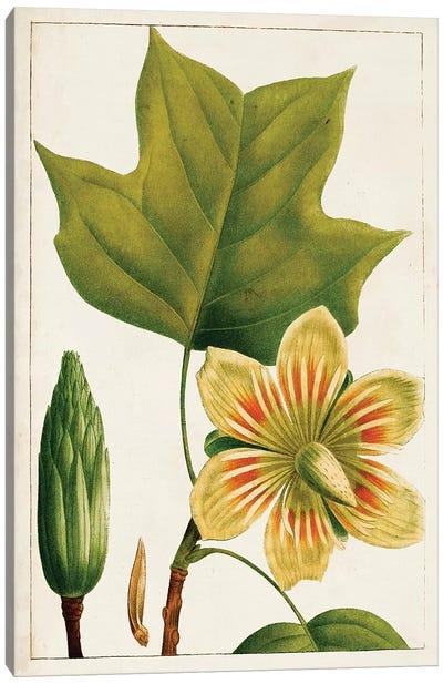 Antique Flowering Trees IV Canvas Art Print