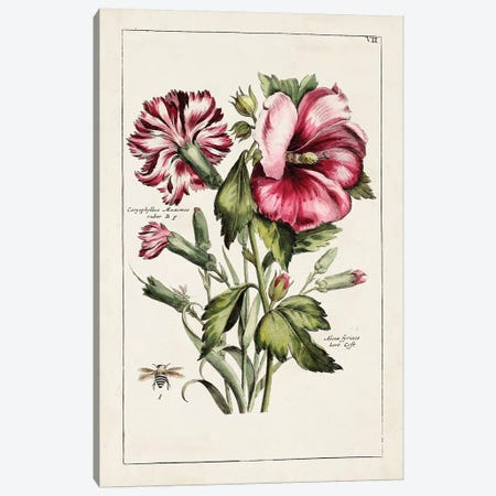 Pink Hibiscus Canvas Print #WAG207} by World Art Group Portfolio Canvas Wall Art