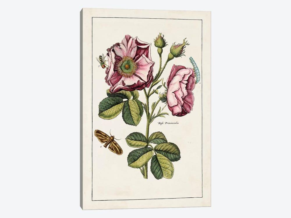 Pink Rose by World Art Group Portfolio 1-piece Canvas Print