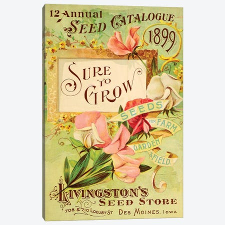 Antique Seed Packets VIII Canvas Print #WAG232} by World Art Group Portfolio Canvas Wall Art