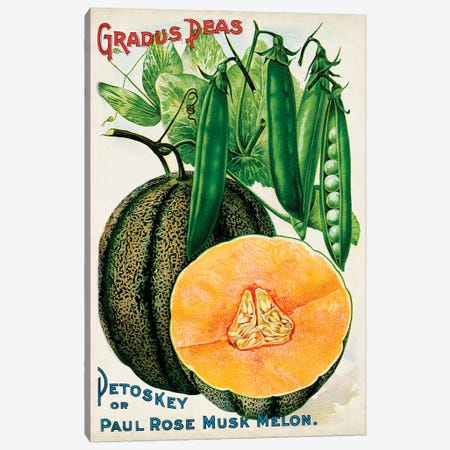 Antique Seed Packets X Canvas Print #WAG233} by World Art Group Portfolio Canvas Artwork