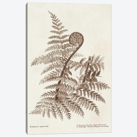 Sepia Fern Varieties I Canvas Print #WAG243} by World Art Group Portfolio Art Print