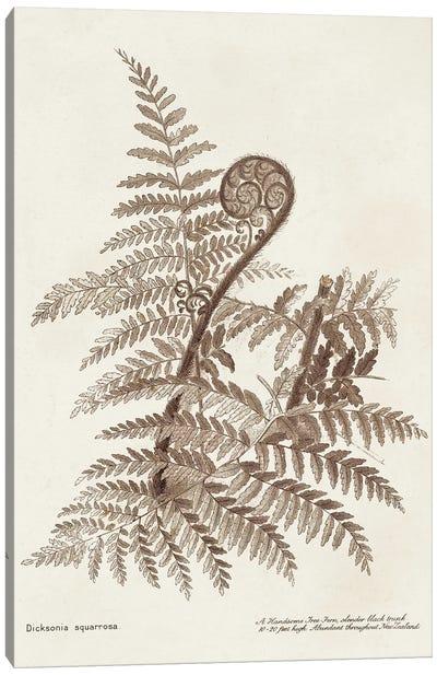 Sepia Fern Varieties I Canvas Art Print