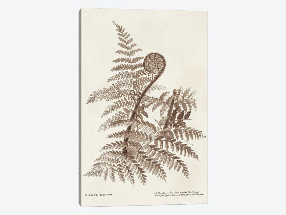 Sepia Fern Varieties I by World Art Group Portfolio 1-piece Canvas Art