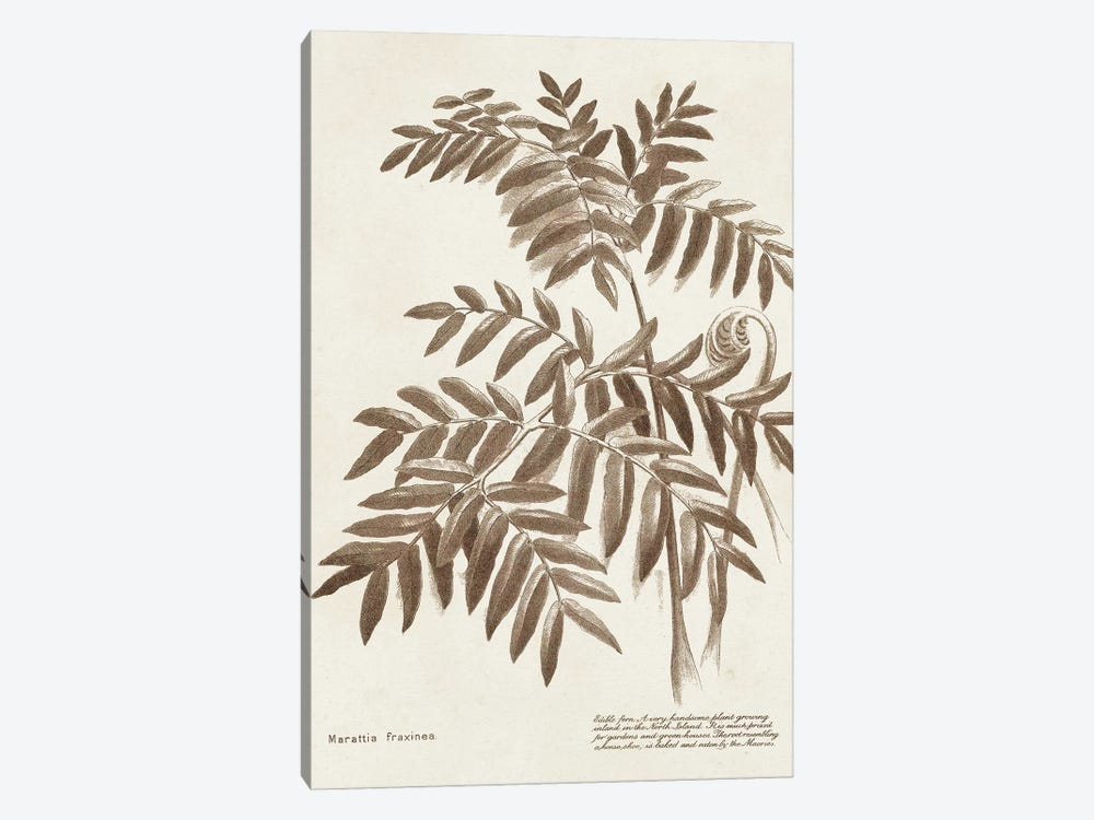 Sepia Fern Varieties II by World Art Group Portfolio 1-piece Canvas Print