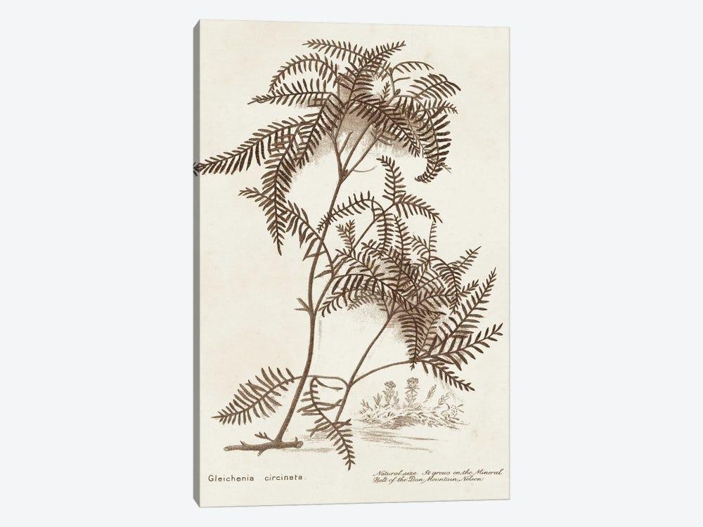 Sepia Fern Varieties III by World Art Group Portfolio 1-piece Canvas Art