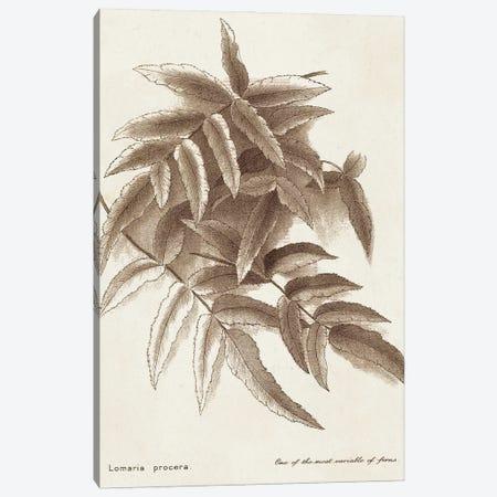 Sepia Fern Varieties IV Canvas Print #WAG246} by World Art Group Portfolio Canvas Art