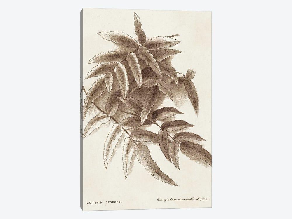 Sepia Fern Varieties IV by World Art Group Portfolio 1-piece Canvas Art Print