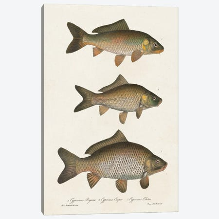 Species of Antique Fish I Canvas Print #WAG247} by World Art Group Portfolio Canvas Artwork