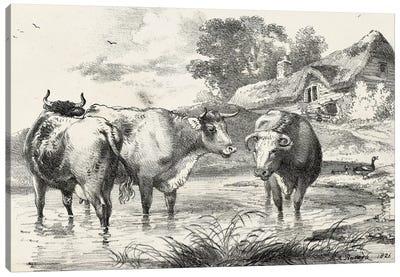 Rural Charms I Canvas Art Print