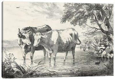 Rural Charms II Canvas Art Print