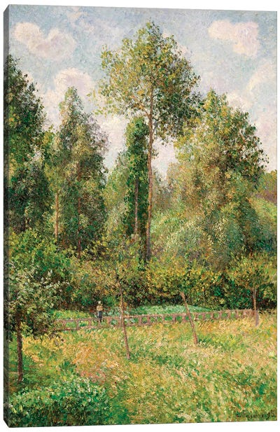 Poplars, Eragny Canvas Art Print
