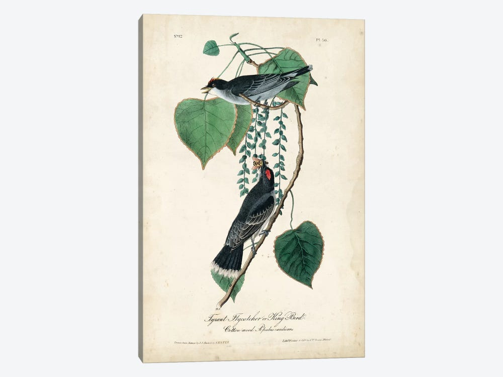 Flycatcher & King Bird by John James Audubon 1-piece Art Print
