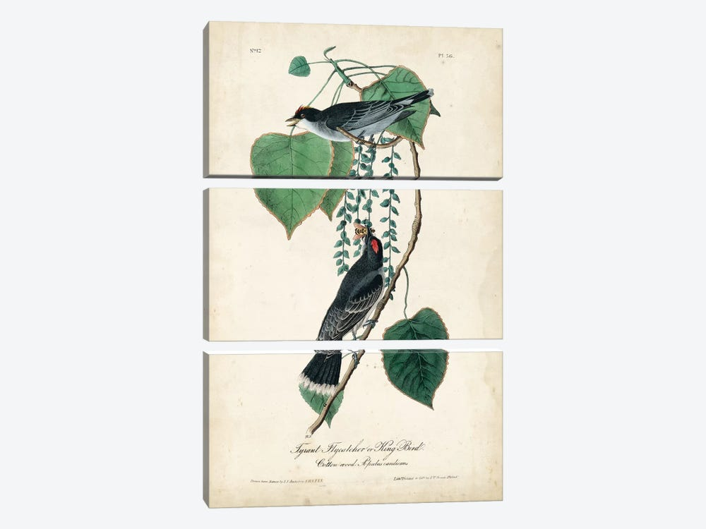 Flycatcher & King Bird by John James Audubon 3-piece Art Print