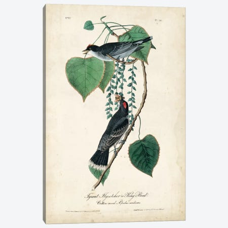 Flycatcher & King Bird Canvas Print #WAG73} by John James Audubon Canvas Wall Art