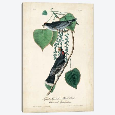 Flycatcher & King Bird Canvas Print #WAG73} by John James Audubon Canvas Wall Art